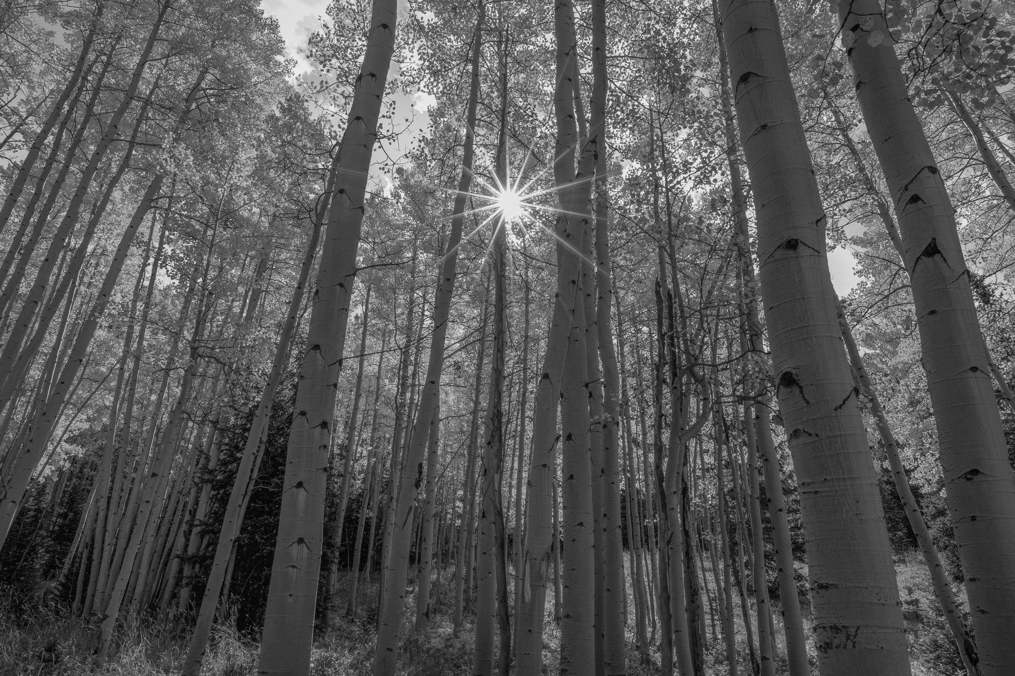 Tónusok (sötét és világos) - NextFoto