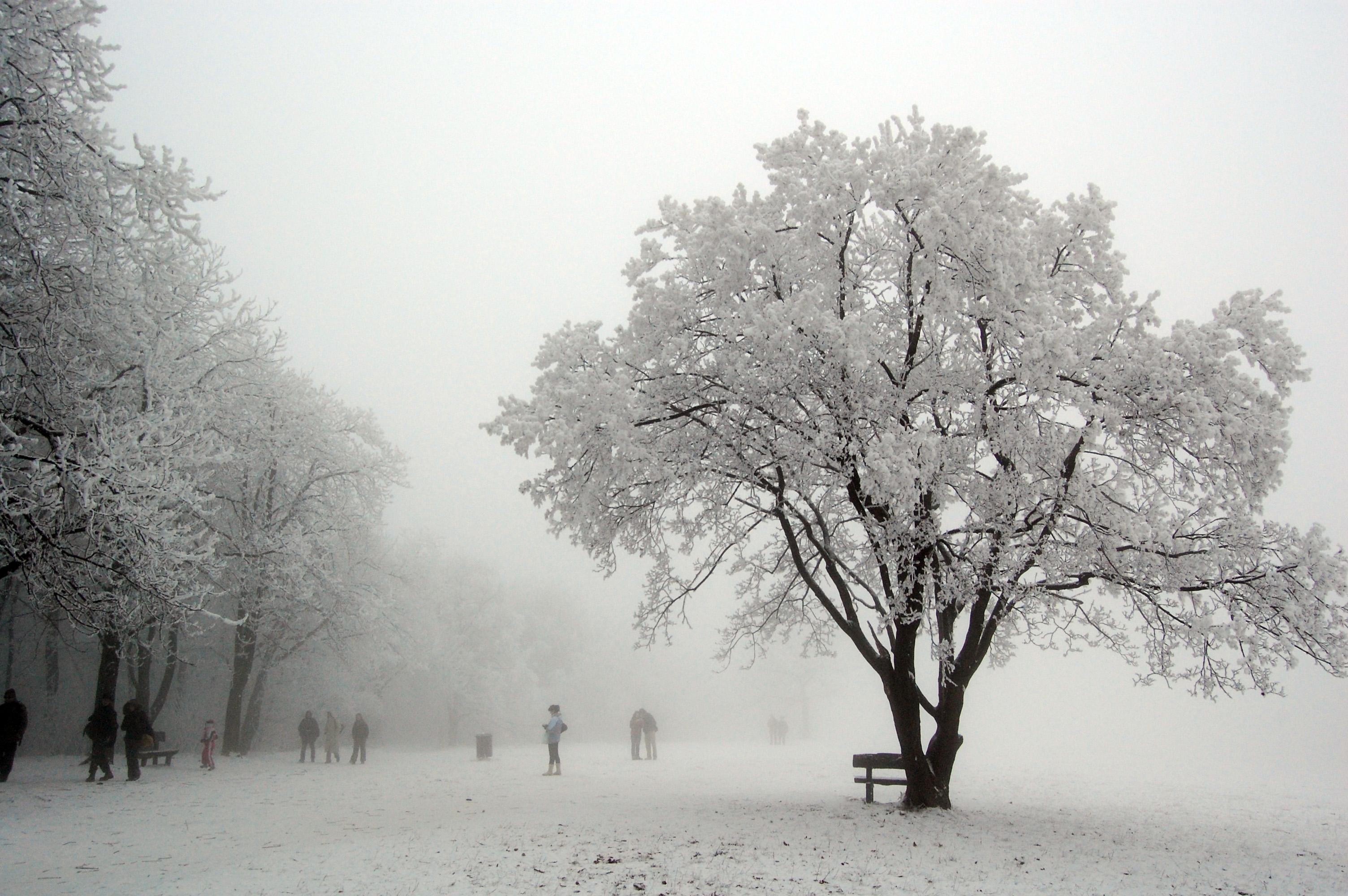 Normafa - Magyarország legromantikusabb fotós helyszínei - NextFoto