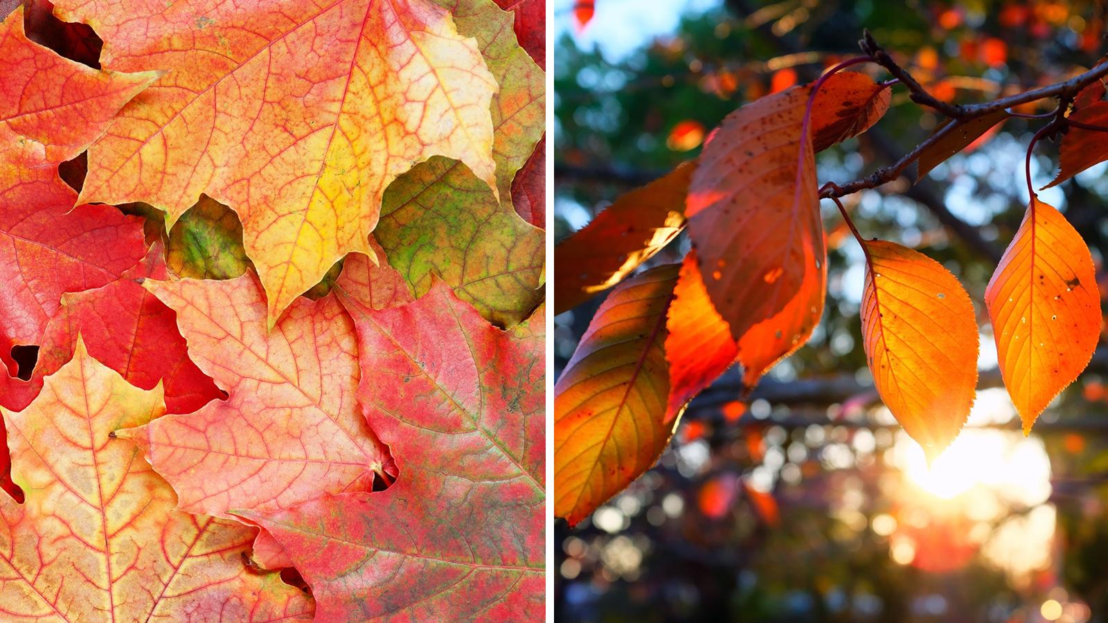 A kerted kincseket rejt! – Tippek természetfotók készítéséhez - Nextfoto
