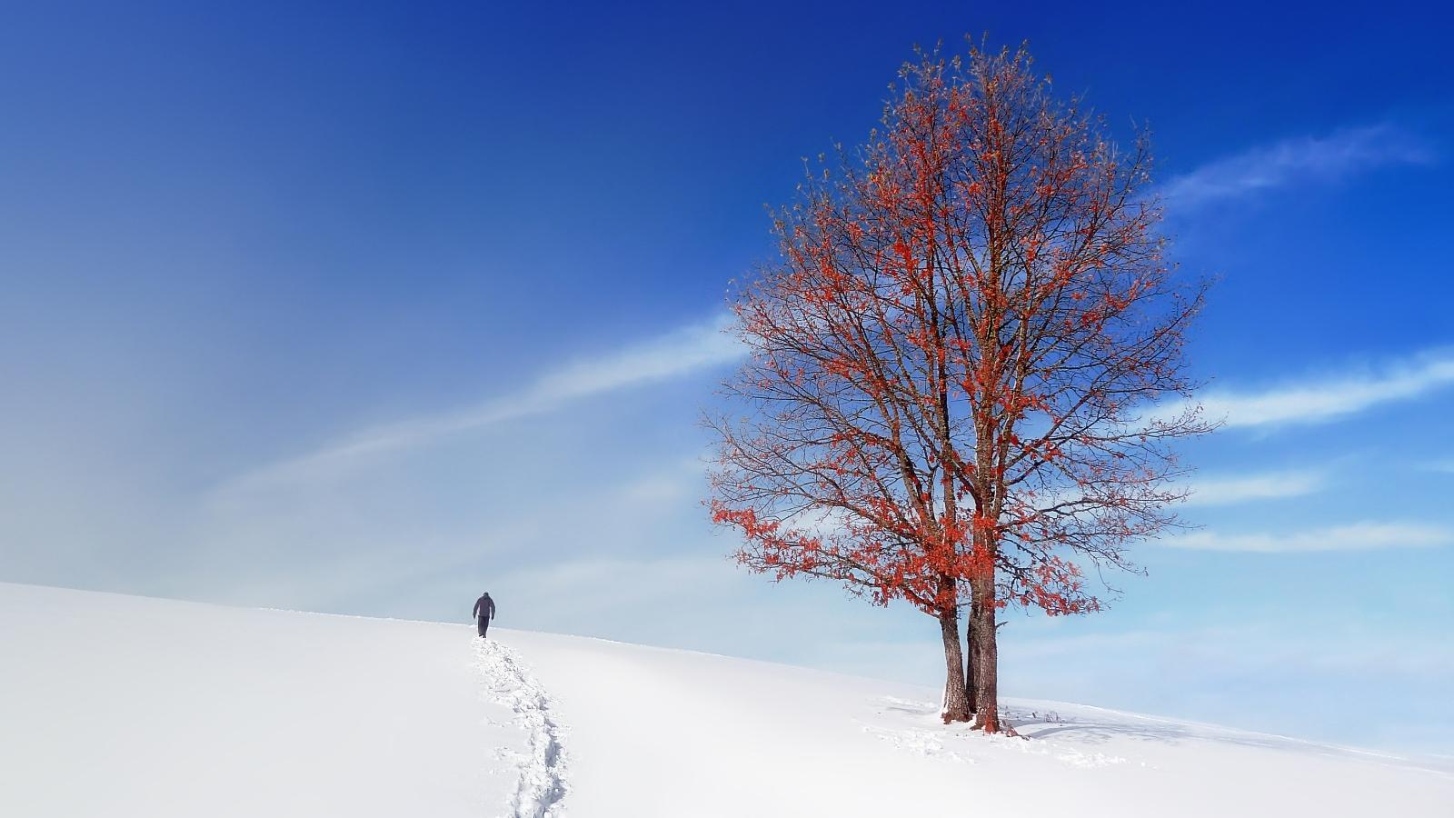 Gondolatébresztő tippek és hasznos tanácsok téli képek készítéséhez - Nextfoto