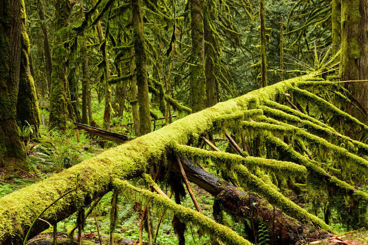 Szente-Varga Éva - National Geographic pic of the day - Esőerdőben